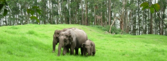 Munnar and Alleppey Taxi Service with Kovalam
